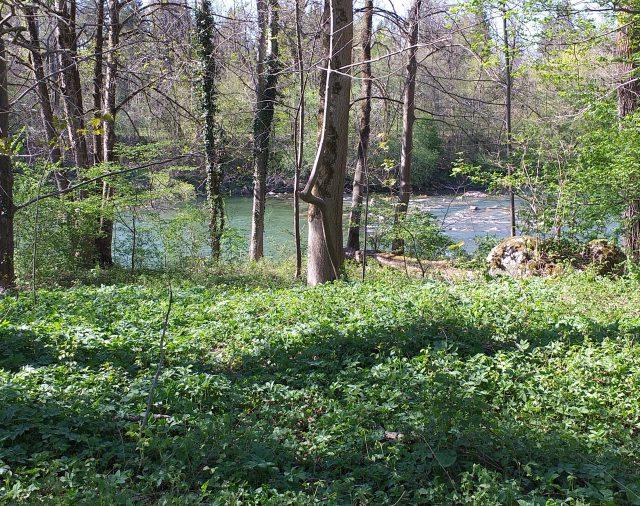 Wald, Wiese, Wasser: Erlebnisspaziergang