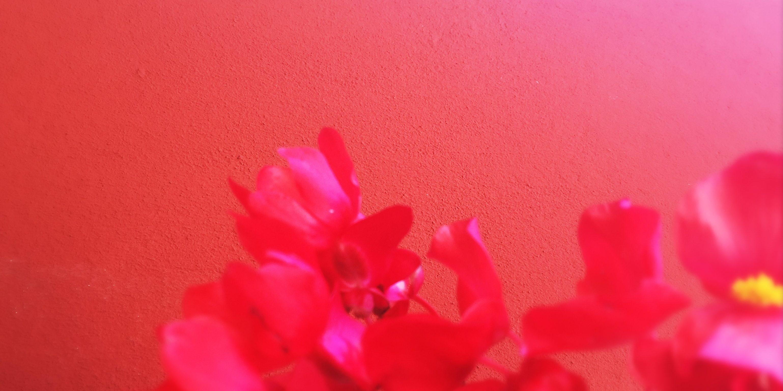 Blumen rosa 02